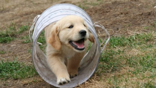 מטיפול רפואי ועד שימורים לכלבים – כך מקבלים כלב חדש לחיק המשפחה